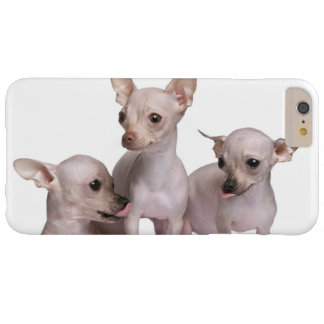 Hairless Chihuahua (5 and 7 months old) Barely There iPhone 6 Plus Case
