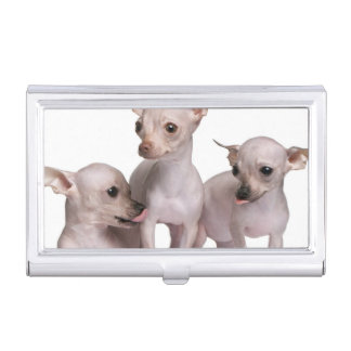 Hairless Chihuahua (5 and 7 months old) Business Card Holder
