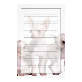 Hairless Chihuahua (5 and 7 months old) Customized Stationery