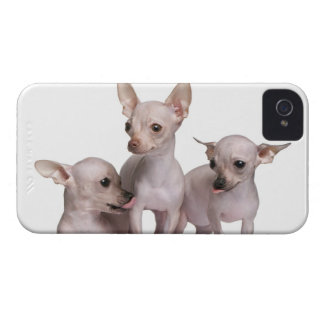 Hairless Chihuahua (5 and 7 months old) iPhone 4 Cover