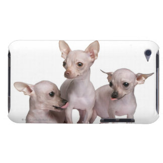 Hairless Chihuahua (5 and 7 months old) iPod Touch Case