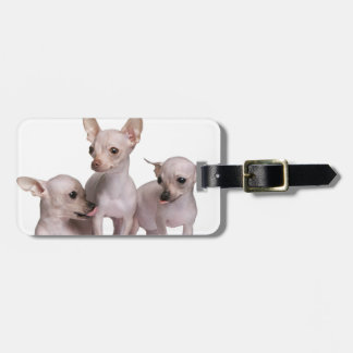 Hairless Chihuahua (5 and 7 months old) Luggage Tag