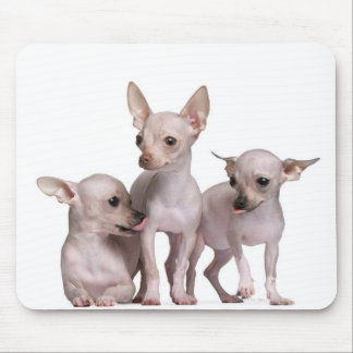 Hairless Chihuahua (5 and 7 months old) Mouse Mat
