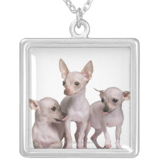 Hairless Chihuahua (5 and 7 months old) Silver Plated Necklace