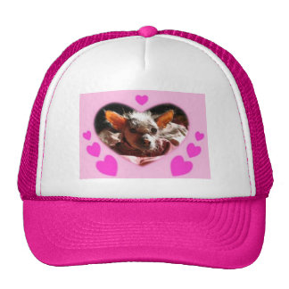 hairless dog binder cap