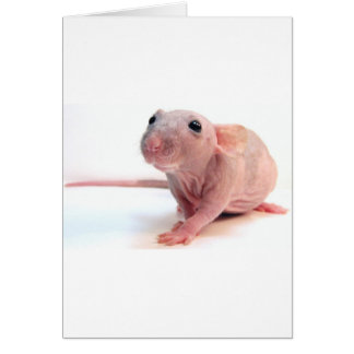 Hairless Rat Card