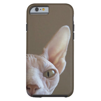 Hairless Sphynx Cat iPhone 6 case