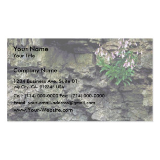 Hairy Beardtongue Pack Of Standard Business Cards