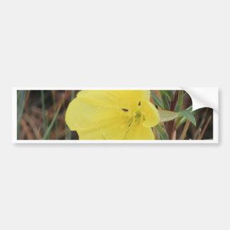 Hairy Evening Primrose Blossom Bumper Sticker