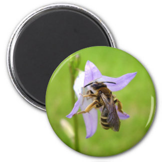Hairy Footed Flower Bee Magnet