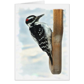 Hairy Woodpecker Cards