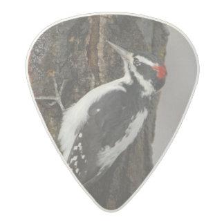 Hairy Woodpecker male on aspen tree, Grand Teton Acetal Guitar Pick
