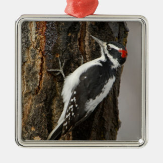 Hairy Woodpecker male on aspen tree, Grand Teton Christmas Ornament