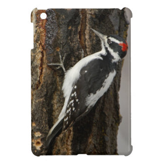 Hairy Woodpecker male on aspen tree, Grand Teton Cover For The iPad Mini