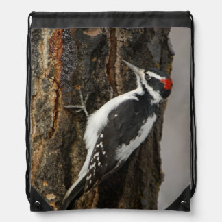 Hairy Woodpecker male on aspen tree, Grand Teton Drawstring Bag