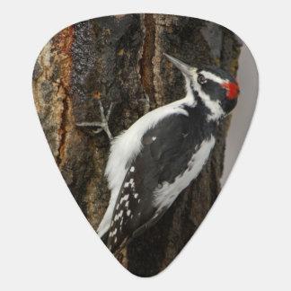 Hairy Woodpecker male on aspen tree, Grand Teton Guitar Pick