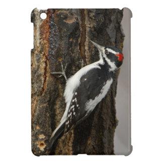 Hairy Woodpecker male on aspen tree, Grand Teton iPad Mini Case