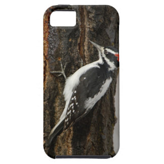 Hairy Woodpecker male on aspen tree, Grand Teton iPhone 5 Covers