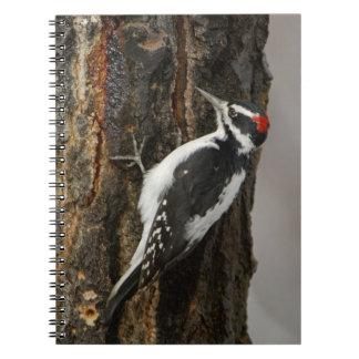 Hairy Woodpecker male on aspen tree, Grand Teton Notebooks