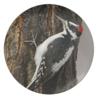 Hairy Woodpecker male on aspen tree, Grand Teton Party Plates