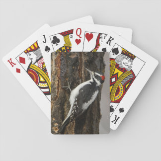 Hairy Woodpecker male on aspen tree, Grand Teton Playing Cards