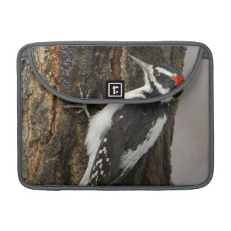 Hairy Woodpecker male on aspen tree, Grand Teton Sleeve For MacBook Pro