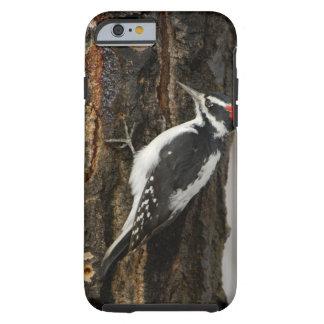Hairy Woodpecker male on aspen tree, Grand Teton Tough iPhone 6 Case