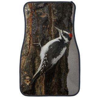 Hairy Woodpecker male on aspen tree, Grand Teton Floor Mat