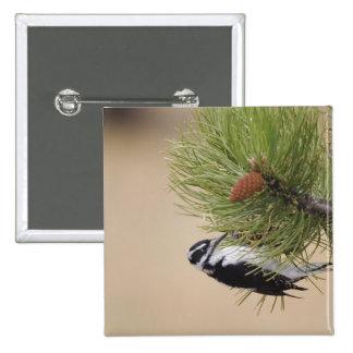 Hairy Woodpecker, Picoides villosus, female 15 Cm Square Badge