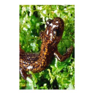 Hakone salamander customized stationery