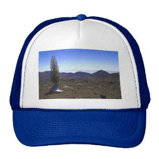 Haleakulo Ahinahina Trucker Hat