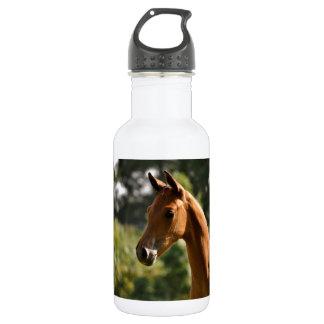 Half-Arabian Basks in the sun. 532 Ml Water Bottle