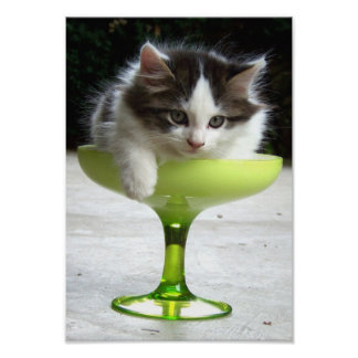 Half Full Kitten Fine Art Print