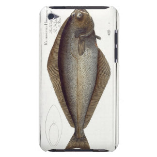 Halibut (Pleuronectes Hippoglossus) plate XLVII fr Barely There iPod Cover