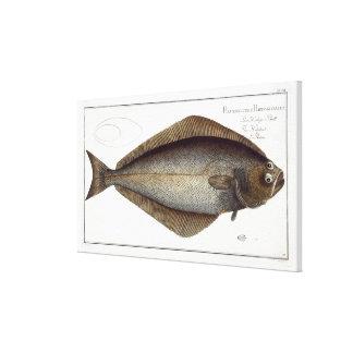 Halibut (Pleuronectes Hippoglossus) plate XLVII fr Canvas Print