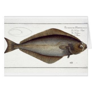 Halibut (Pleuronectes Hippoglossus) plate XLVII fr Card