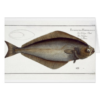 Halibut (Pleuronectes Hippoglossus) plate XLVII fr Greeting Card