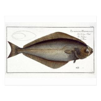 Halibut (Pleuronectes Hippoglossus) plate XLVII fr Postcard