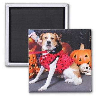 Halloween - Beagle Labrador X - Jacob Magnet