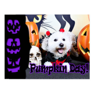 Halloween - Bichon Frise - Andi Postcards
