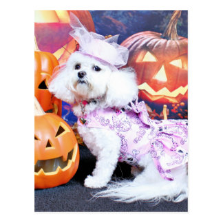 Halloween - Bichon Frise - Mia Post Cards