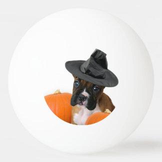 Halloween boxer puppy