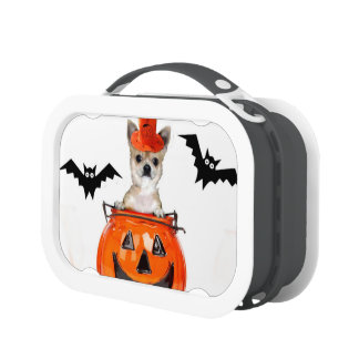 Halloween chihuahua dog lunch boxes