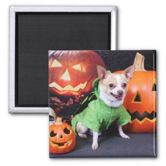 Halloween - Chihuahua - Gizmo Magnets