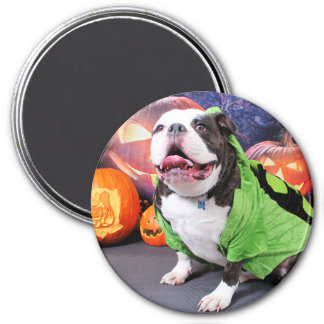 Halloween - English Bulldog - Spike Fridge Magnets