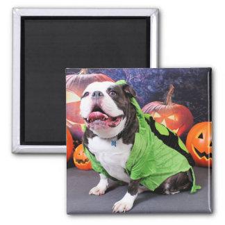 Halloween - English Bulldog - Spike Refrigerator Magnet