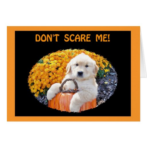 Halloween Funny Puppy Witch T-Shirts & Gift Items Greeting Card