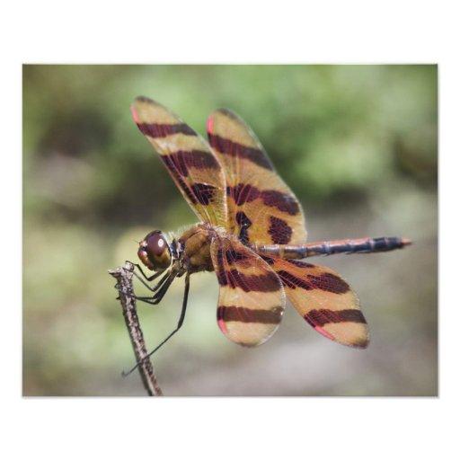 Halloween Pennant Dragonfly Photo Print