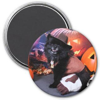 Halloween - Pomeranian - Cody Fridge Magnets