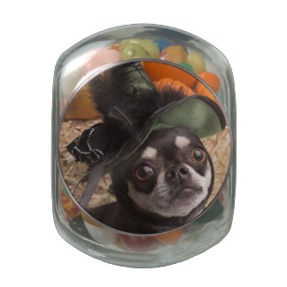 Halloween Witch Dog Jelly Belly Candy Jars